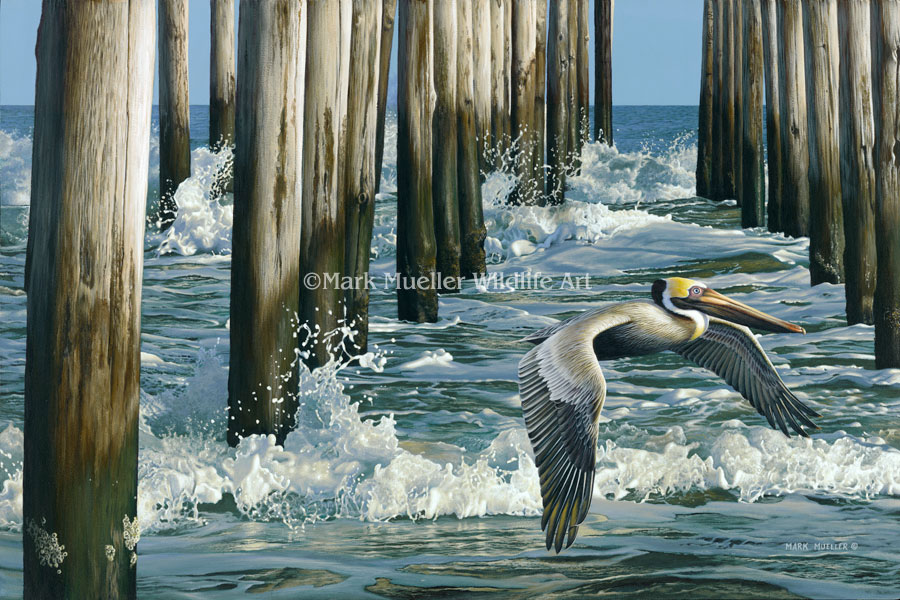 Pelican painting by Mark Mueller