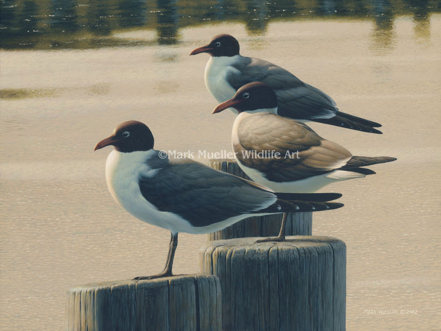 Laughing Gulls painting by Mark Mueller