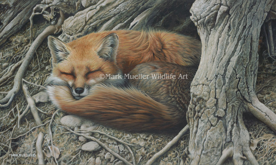 Red Fox painting by Mark Mueller