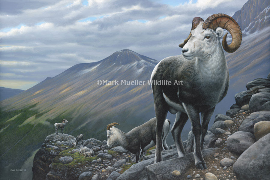 Stone Sheep painting by Mark Mueller