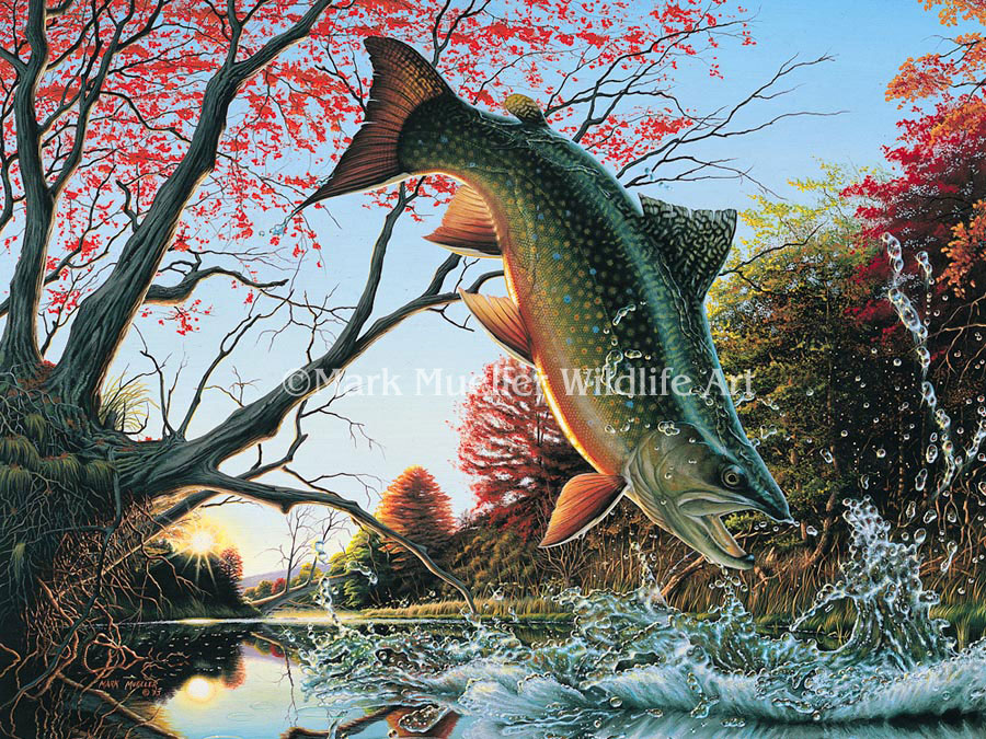 Brook Trout painting by Mark Mueller