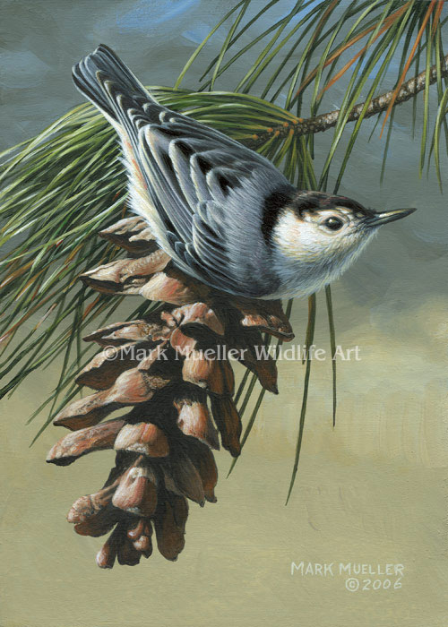 White-breasted Nuthatch painting by Mark Mueller