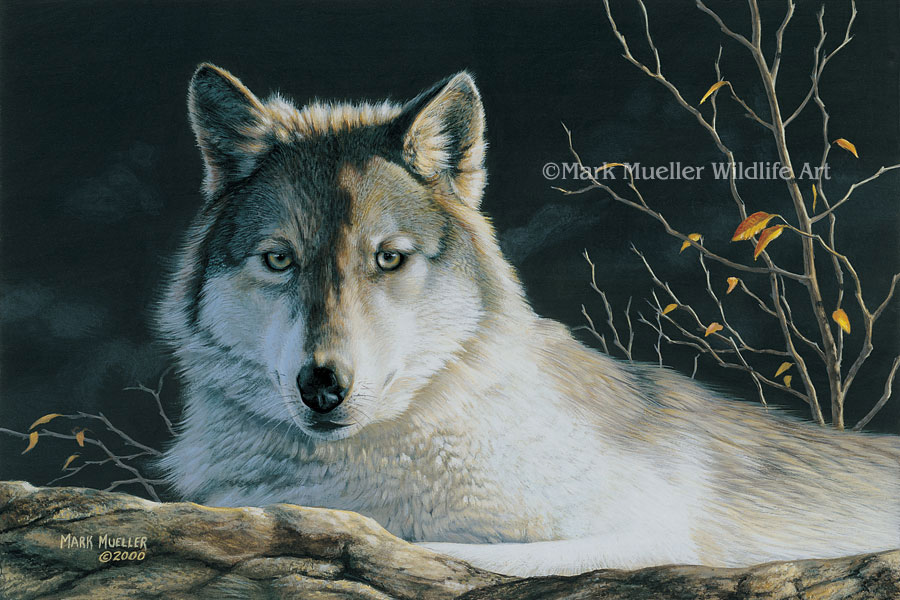 Gray Wolf painting by Mark Mueller
