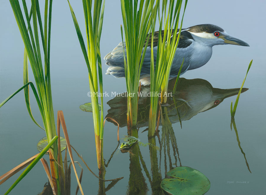 Black-crowned Night Heron painting by Mark Mueller