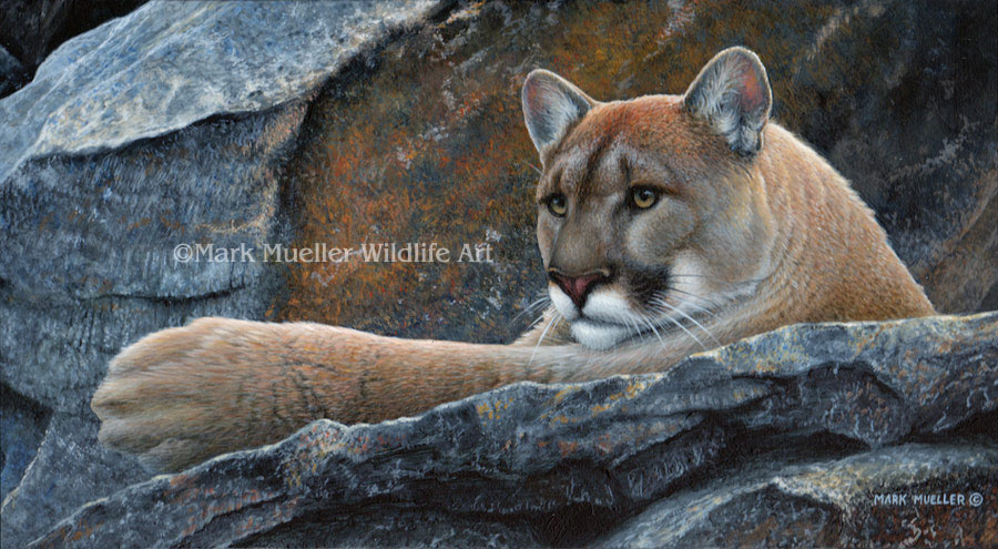 Cougar painting by Mark Mueller