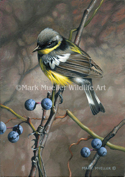 Magnolia Warbler painting by Mark Mueller