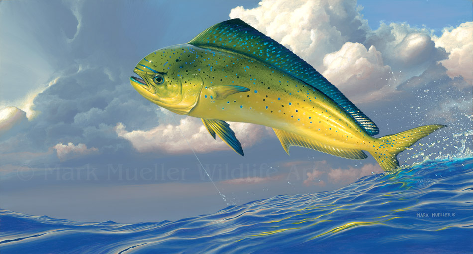 Mahi Mahi painting by Mark Mueller