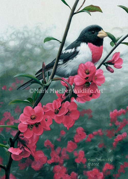 Rose-breasted Grosbeak painting by Mark Mueller